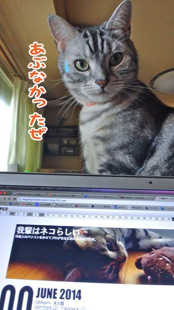 ポーとブログ文字_edited-1