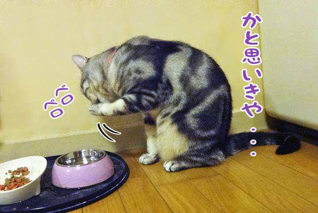 ポーさん 水飲み瞬間_edited-2
