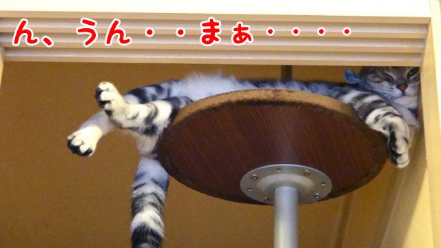 ポーキャットポール文字_edited-1