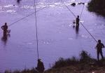 狩野川の釣り-01P 94t