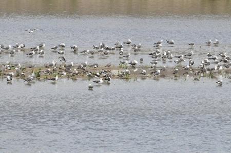 river-flock2