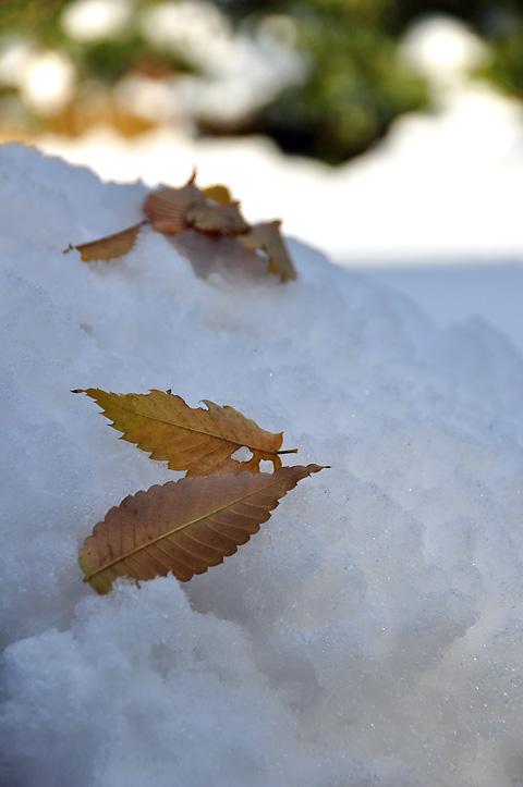 雪に落ち葉