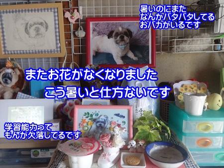 0821-03_2014082119252225c.jpg
