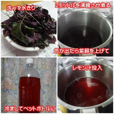 0706-紫蘇