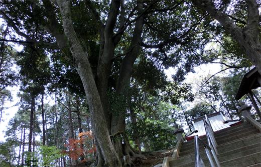 白幡神社2