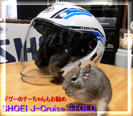 昭栄ヘルメットとデグー