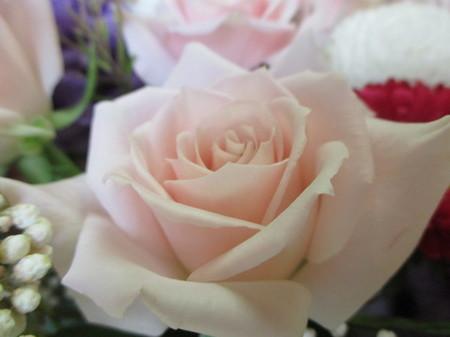 淡いピンクのバラ。