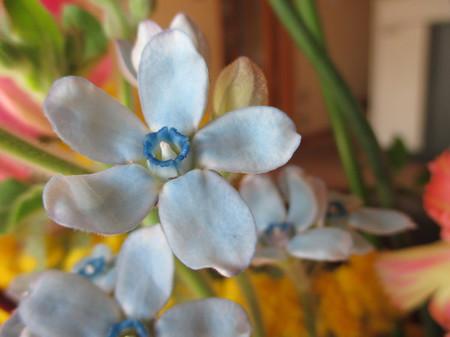 ユウタの花。
