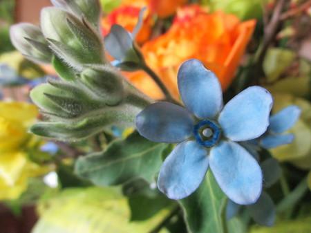 ユウタのお花。