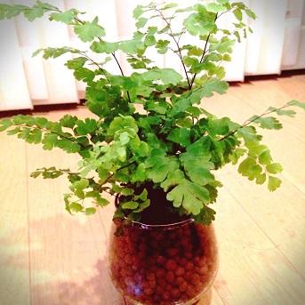 観葉植物201407 (1)