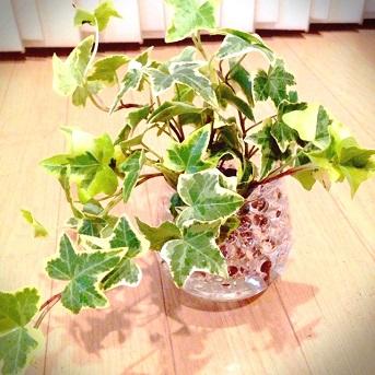 観葉植物201407 (2)