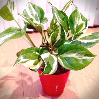 観葉植物201407 (3)
