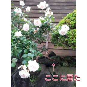 004_20140531061743f24.jpg