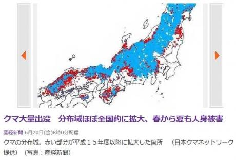kuma_seiryoku2.jpg