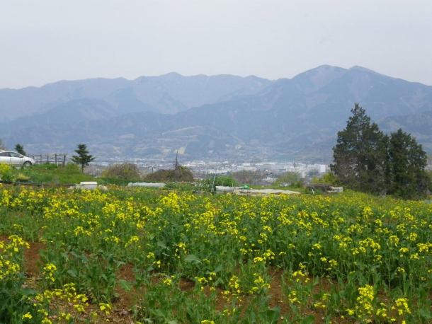 渋沢丘陵140413