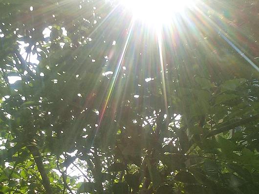 トネリコの樹☆