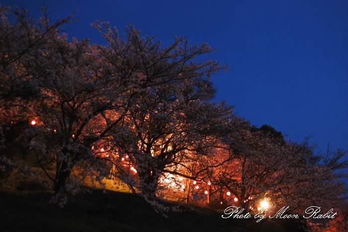 藤山健康文化公園 夜桜 愛媛県今治市大西町