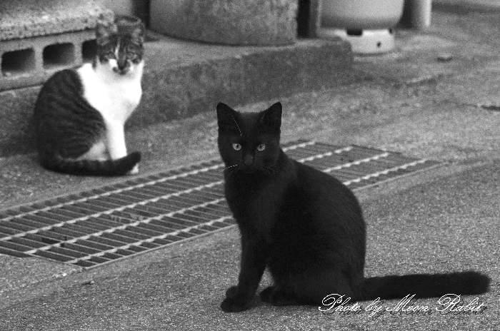 猫 四国 愛媛県西条市小松町新屋敷