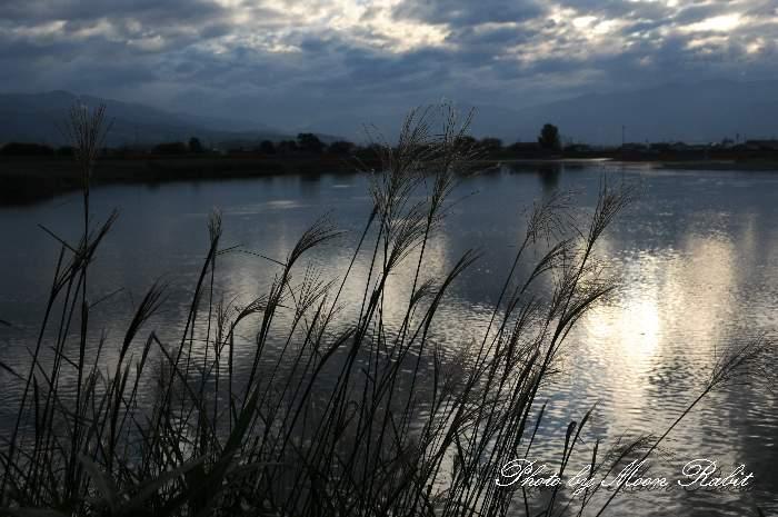 芒(ススキ) 愛媛県西条市古川 加茂川堤防