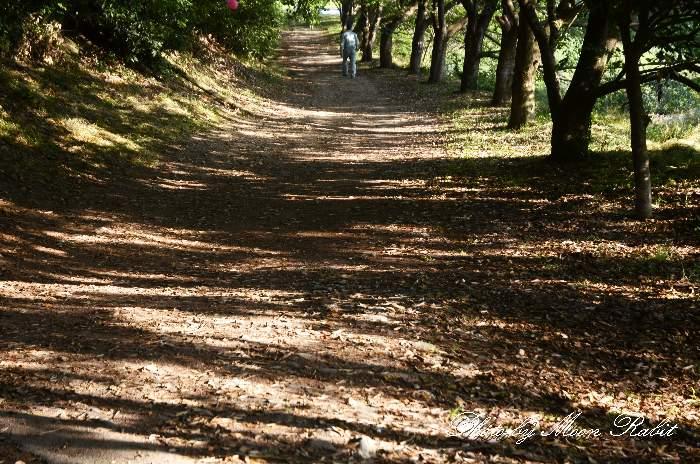 木漏れ日 愛媛県新居浜市中萩町6 自然園