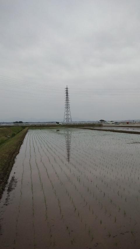 田植え2014