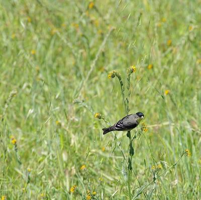 フィドルと鳥20140420