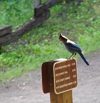 青い鳥20140420