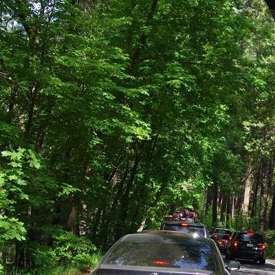 ヨセミテ渋滞20140524