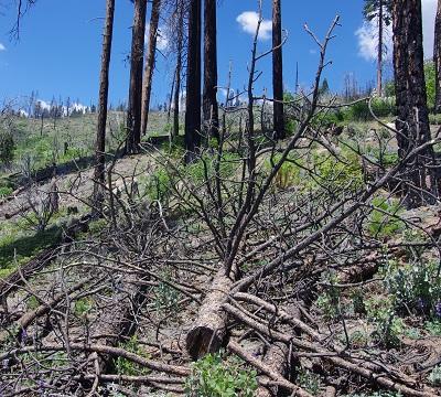 森林火災20140525