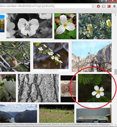 20140802画像検索