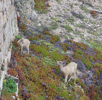 20140809崖の鹿