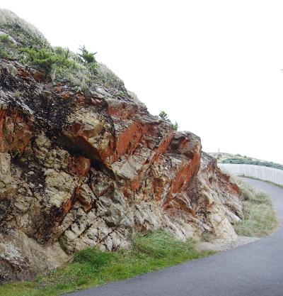 20140809崖の藻屑