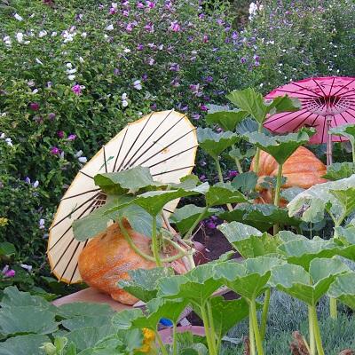20140821かぼちゃ日傘