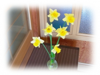 水仙 黄色 写真 庭
