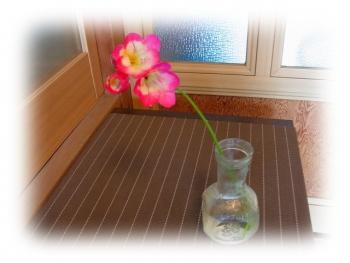 花 写真 一才桜