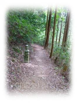 高野山参詣登山(町石道)その2|写真|蓬庵のブログ(^^)
