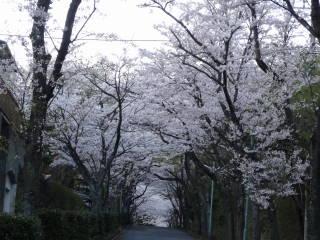 sakuea1.jpg
