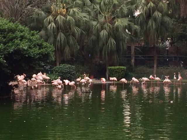 写真 九龍公園2