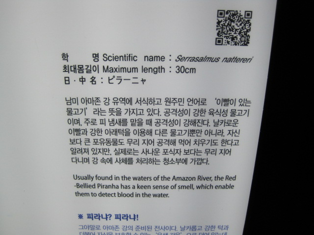 2014韓国 093