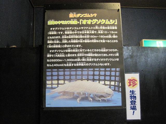 新潟 131