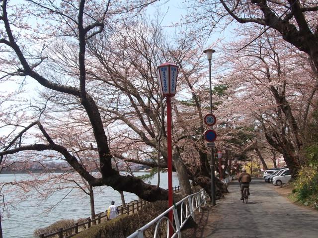 盛岡桜まつり