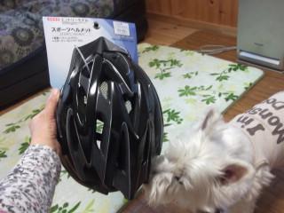 自転車用のヘルメットで~す