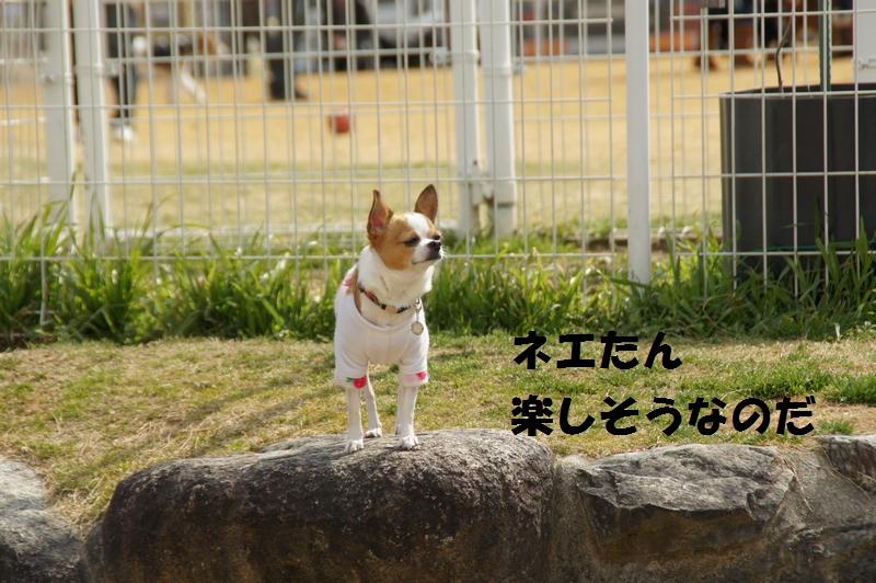12_201402241904319cc.jpg
