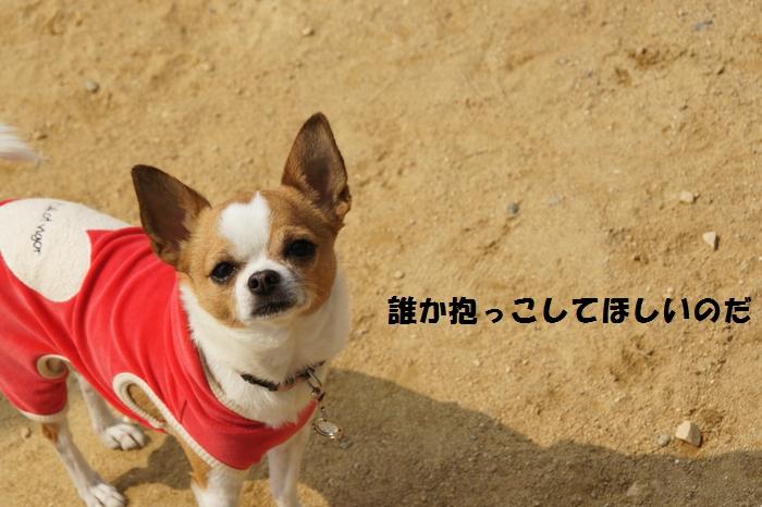 7_20140330192036adb.jpg