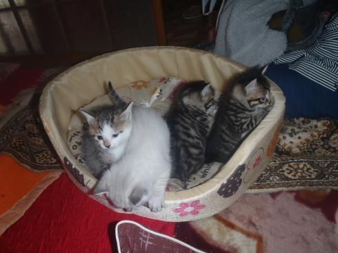 4匹の猫の子