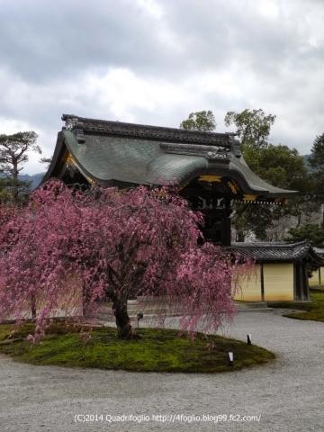 2014年 京都・春 その②