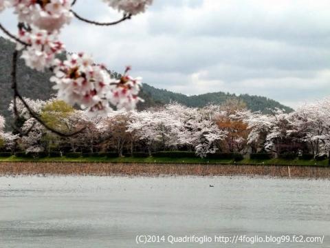 2014年 京都・春 その④