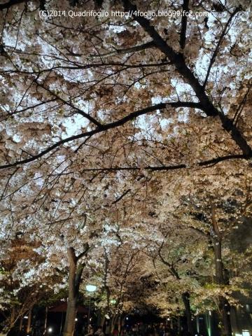 2014年 京都・春 その⑧