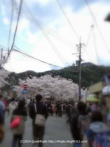 2014年 京都・春 その⑩