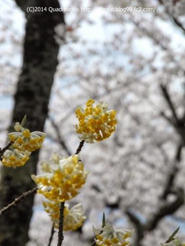 2014年 京都・春 その⑪